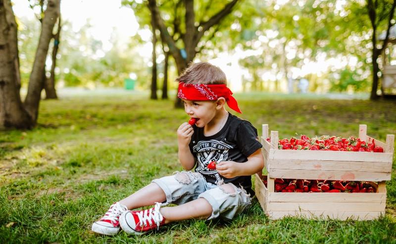 enfant près de caisses de fraises habiller en short , un bandana rouge autour de la tête et des converse garçon aux pieds